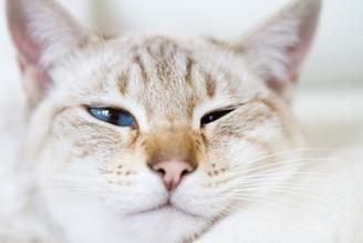 Katze60.jpg