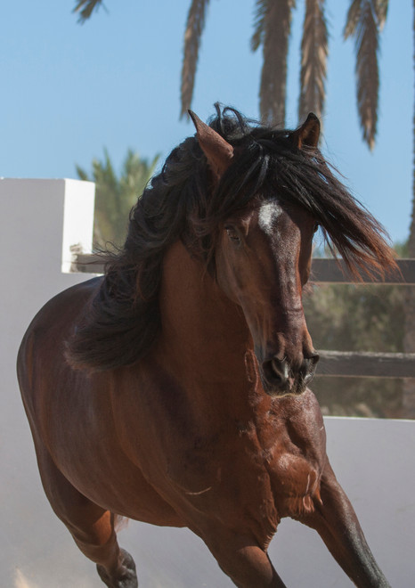 Berber71.jpg