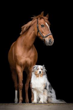 Hund_Pferd002.jpg