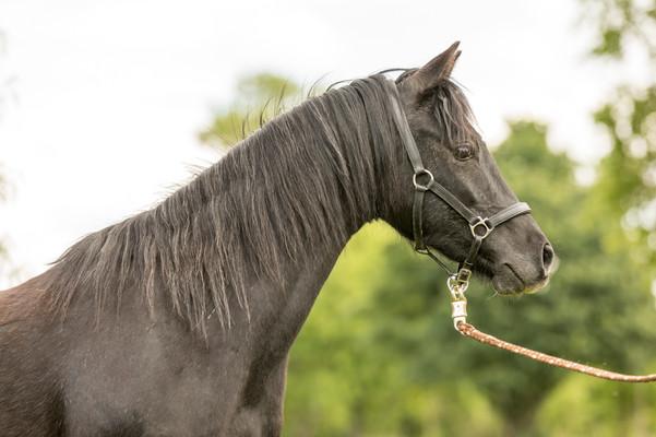Pony164.jpg