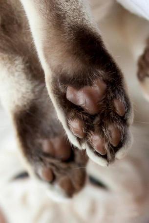 Katze111.jpg