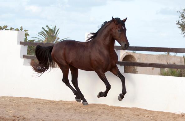 Berber60.jpg
