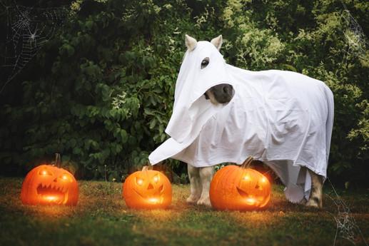 Halloween42.jpg