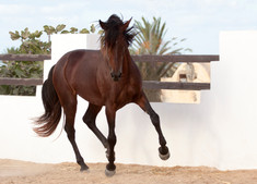 Berber59.jpg