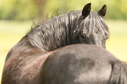 Pony170.jpg