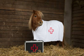 Dr.Pony002.jpg