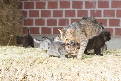 Katze102.jpg