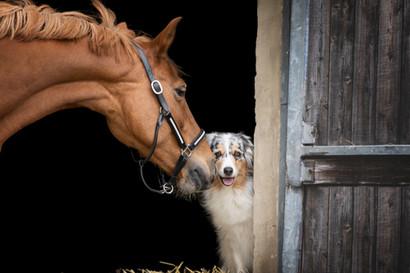 Hund_Pferd006.jpg