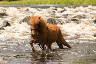 Pony150.jpg