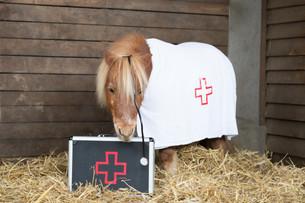 Dr.Pony007.jpg