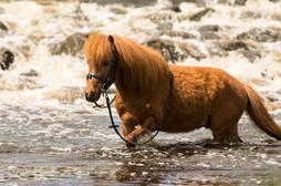 Pony148.jpg