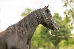 Pony165.jpg