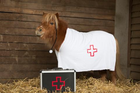 Dr.Pony001.jpg