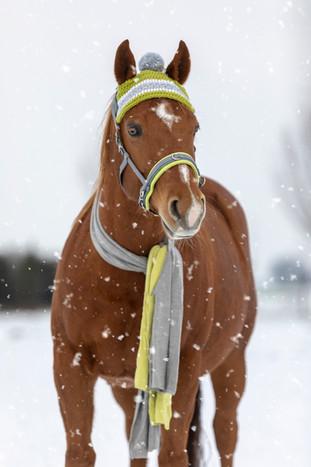 Schnee004.jpg