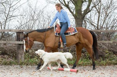 HorseDogTrail99.jpg