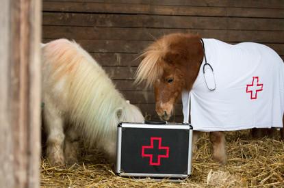 Dr.Pony035.jpg