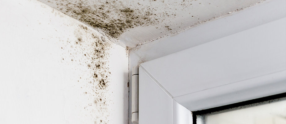 mould-in-the-corner-of-a-window-banner.j