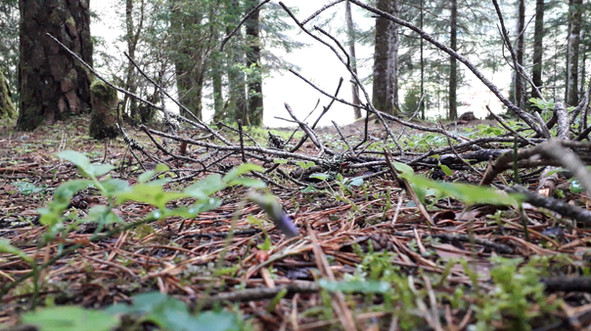 Vista de Hormiga en baño de bosque
