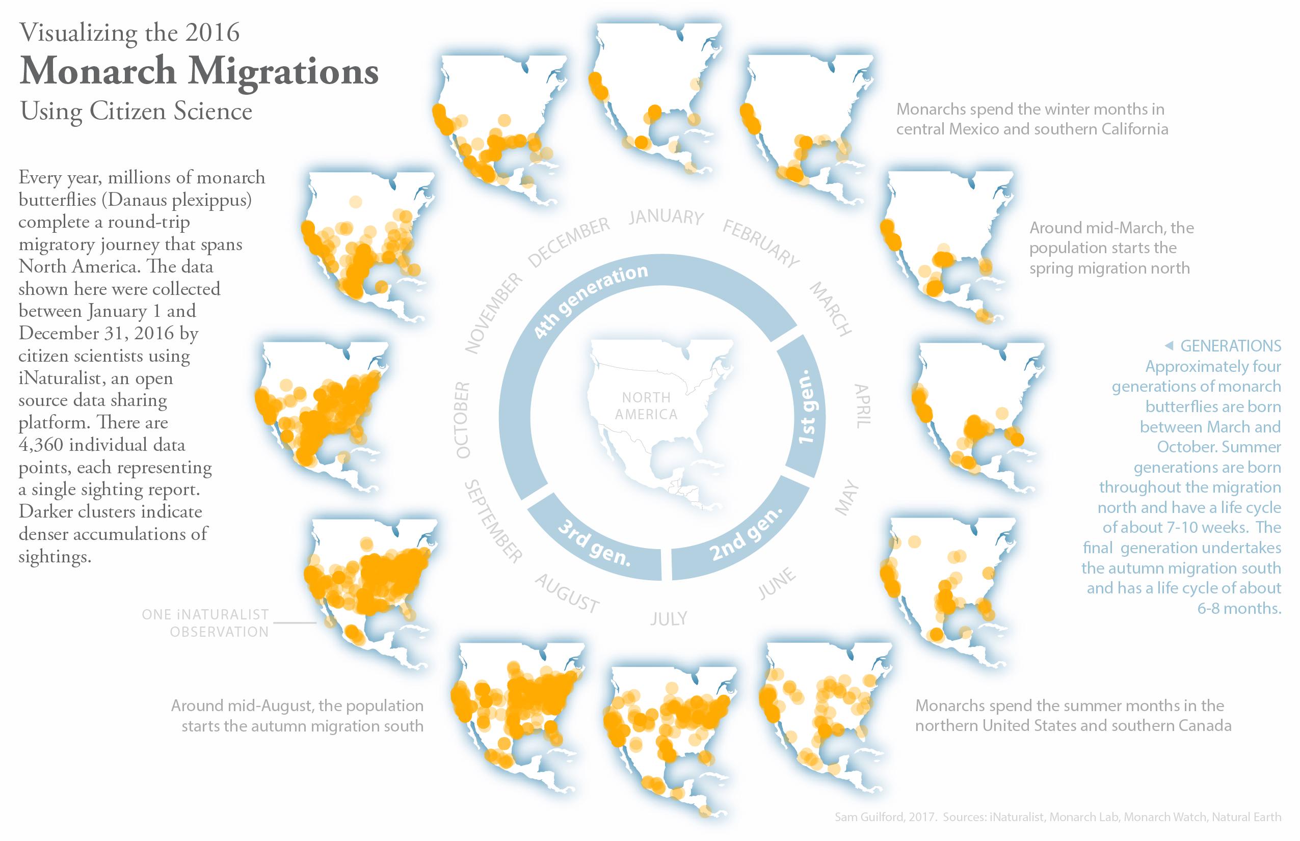 Monarch migrations, using iNaturalist data