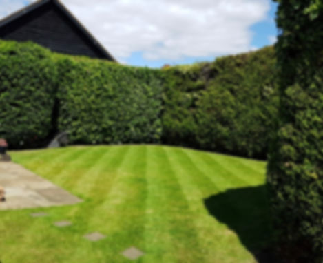 Garden Hedge and Tree Trimming in Borehamwood