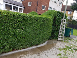 Hedge Trimming by Life on the Hedge