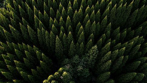 forest background.jpg