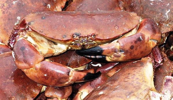 05May16133709Local_Norfolk_Seafood.jpg