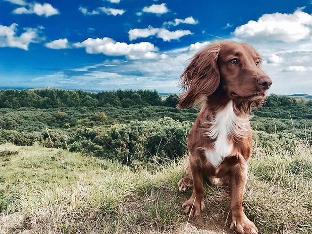 Dog Friendly - The Globe Inn