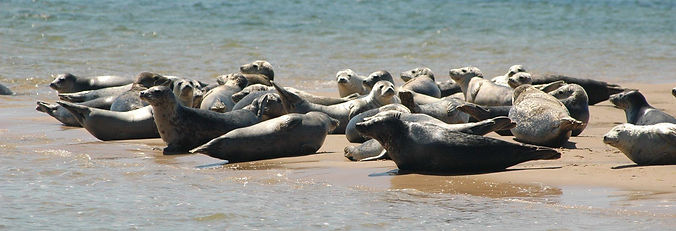 Seal_Watching04may16130856.jpg
