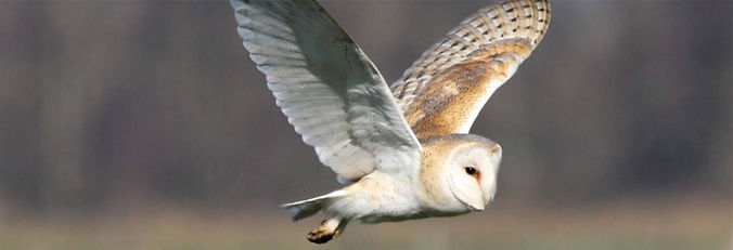05May16141104Norfolk_Wildlife.jpg
