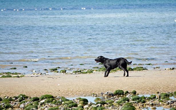 dog-on-beach-1375647849bwi.jpg