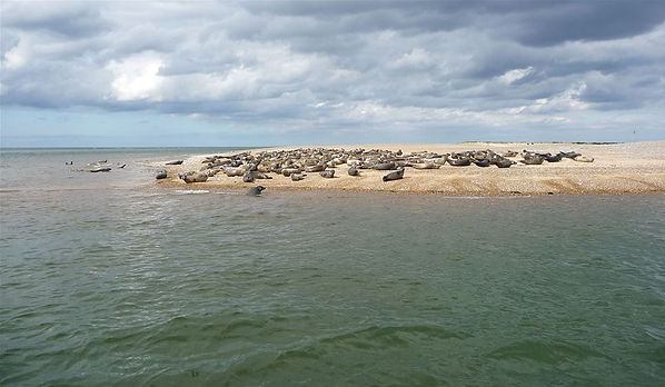 Seal_watching_in_Blakeney_Point05may1613