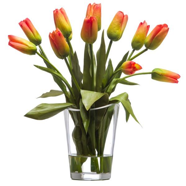 Orange Bud Tulips