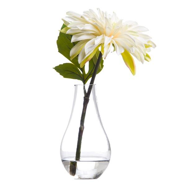 Single White Dahlia
