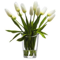 White Bud Tulips