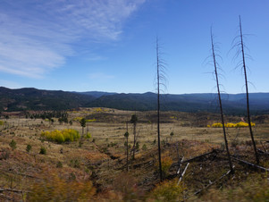 Chasing the Aspens in Colorado, Part 2