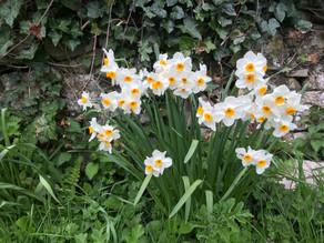 Vegetation Diary: The Joy of Spring