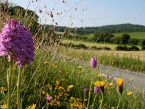 Flower Report: Lockdown could boost wild flowers