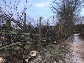 Traditional Hedge Laying