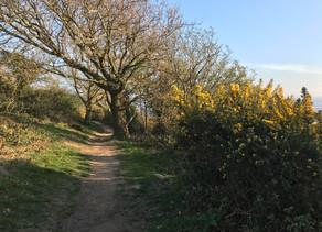 Plants on Watch: Quercus petraea