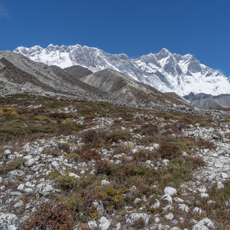 Himalayan drought as plants raise temperatures
