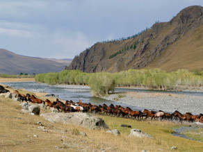 Mongolia Report - Reflections on Mongolia's Air Pollution Problem