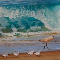 Shorebreak Shorebirds