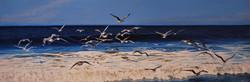 Seagulls Away, Carlsbad