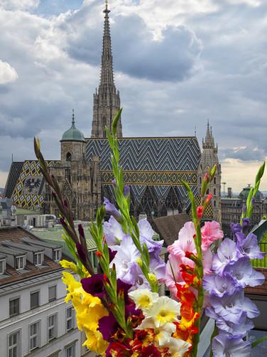 Wien Dom.jpg