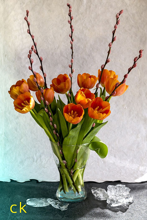 Tulpen orange mit Eis fb.jpg
