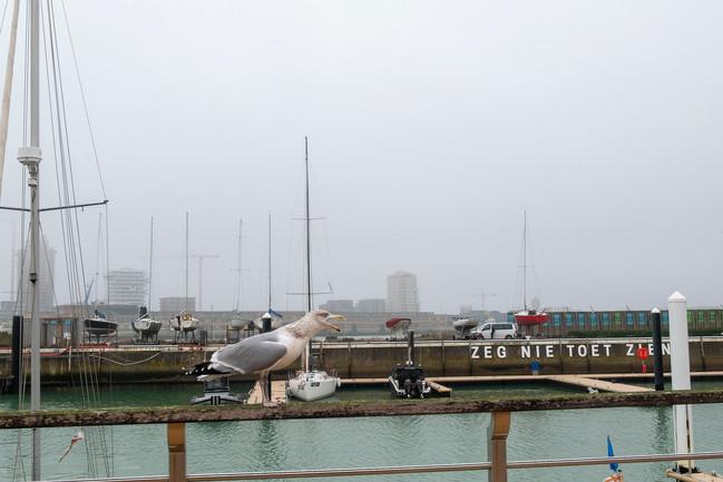 Seagull, November 2020