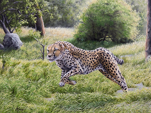 Cheetah in the Grassland