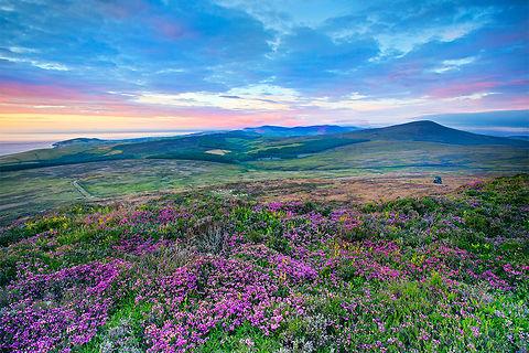 Isle of Man wildflowers.jpg