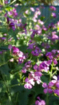 river-and-eve-flora-sydney-florist-weddi